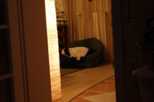 spanko na psiej budzie